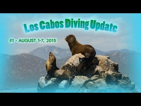 Mexican Piranhas!  - Los Cabos Diving Update  #1 - August 1-7, 2015