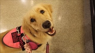 Keeping Up with My Service Dog's Skills! (4/27/17)