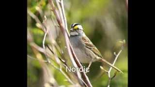 Oiseaux chanteurs série-001 (oiseauxduquebec.org)