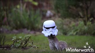 SquirrelTrooper - #Winterwatch - Earth Unplugged
