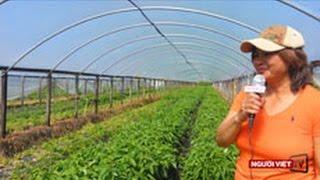 Người Việt và nghề trồng rau trên đất Mỹ