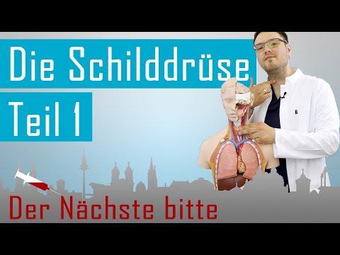 Schilddrüse 1 - Besuch in der Anatomie