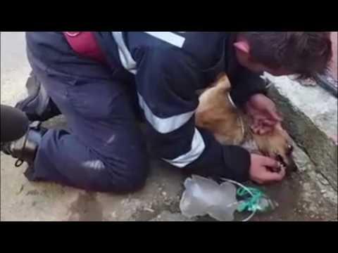 Сеть тронуло видео спасения жизни маленькому псу пожарным