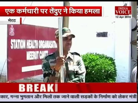 Leopard entered the Military Hospital in Meerut,