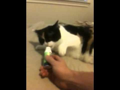 Агрессивный кот / Aggressive Cat