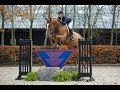 Glorious Equitation / Hunter Prospect (SOLD)