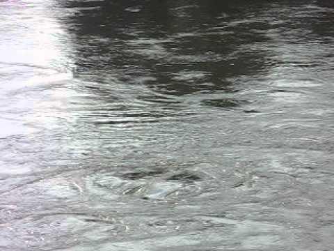 "mulinelli d' acqua in adige ""le rose"" albaredo d' adige ronco all' adige verona - YouTube"