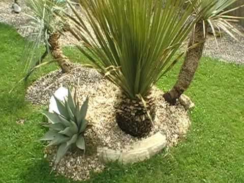 Palm 2009 videolike for Jardin west palm
