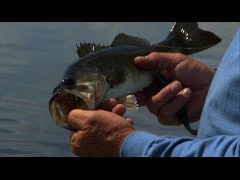 Largemouth Bass fishing on Lake X