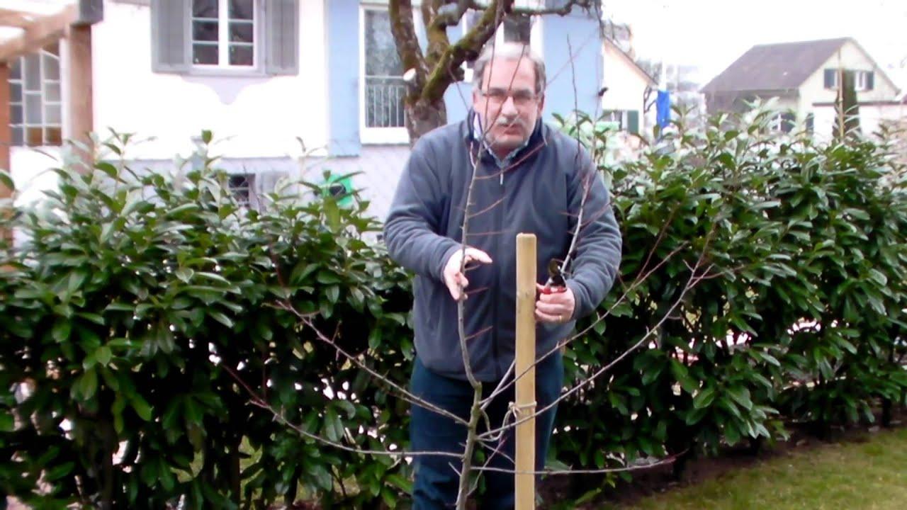 schneiden im garten 2011 herr inderkum 8v10 schnitt eines jungen mirabellenbaums youtube. Black Bedroom Furniture Sets. Home Design Ideas