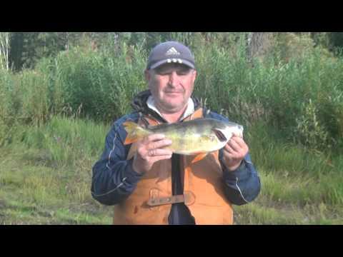 рыбалка на илиме реке