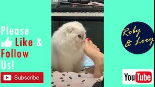 Funny Cats Videos Try Not To Laugh 2019: Cat Smells Feet Gif