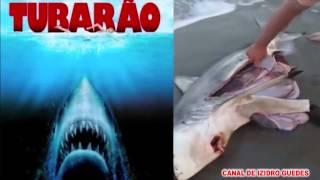 Homem salva filhotes de tubarão