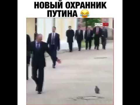 Путин и голубь | Putin and the dove