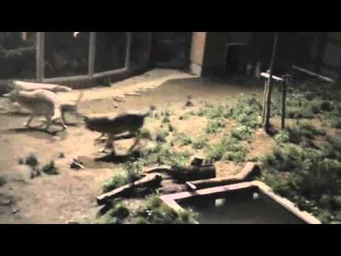 カルチャーナイト2011 円山動物園〜Zoo of night