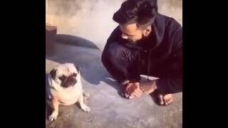 Teaching punjabi to dog...funny video