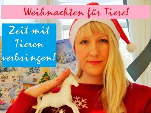 Tiere in der Weihnachtszeit / Ihr könnt helfen!