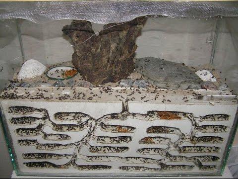 Как сделать домашней муравейник