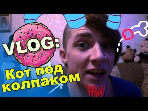 VLOG: КОТ ПОД КОЛПАКОМ / Андрей Мартыненко