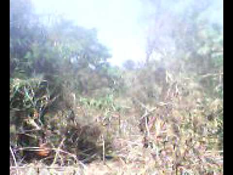 strowhot RGgang Tarzan x