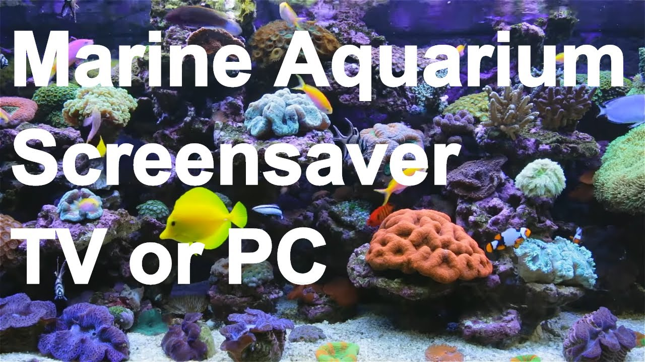 Amazing marine aquarium screensaver youtube for Fish tank screen