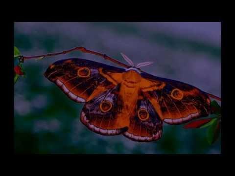 butterflies at the creek