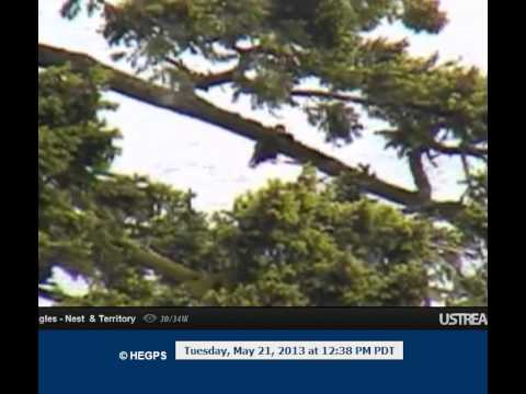 12:38 looks like 2 eagles on Peters tree