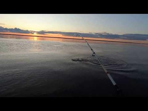 Рыбалка.Рыбное Эльдорадо (часть 4я заключительная.)