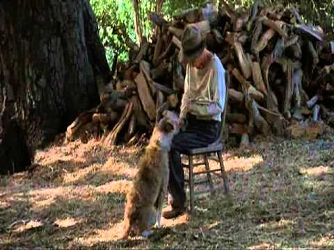 shooting of candy s dog and shooting of lennie Of mice and men who shot candy's dog  to kill the dog quickly by shooting it in the  death of candy's dog affect george and lennie.
