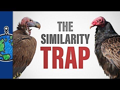 The Similarity Trap
