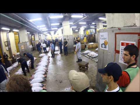 Tuna Auction Tsukiji Fish Market, Tokyo