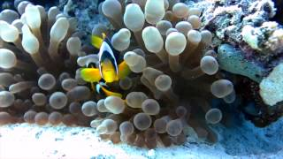 Hurghada Diving/ Egypt
