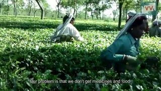 Tea garden workers don't get any benefits including PF & gratuity | Harihar reports for IndiaUnheard
