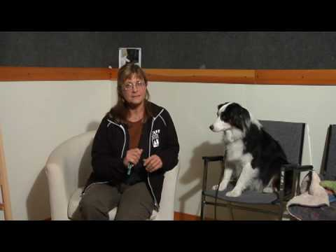 Dog Care & Training : How to Use a Dog Whistle to Stop Barking