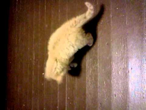 Kitten At Play video