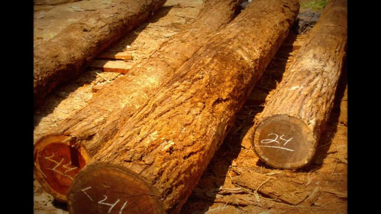 Granadillo mexicano platimiscium yucatanum youtube for Vetas en la madera