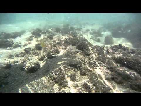 Snorkeling en Playa Los Cobanos - El Salvador - Central America - Gopro Dive Housing