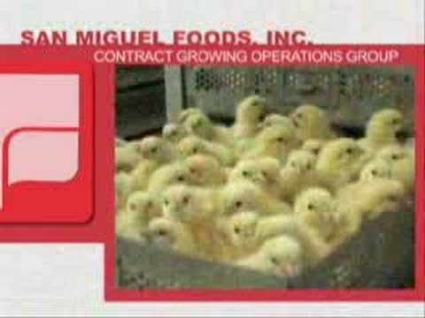 Broiler Contract Growing using Tunnel Ventilation System
