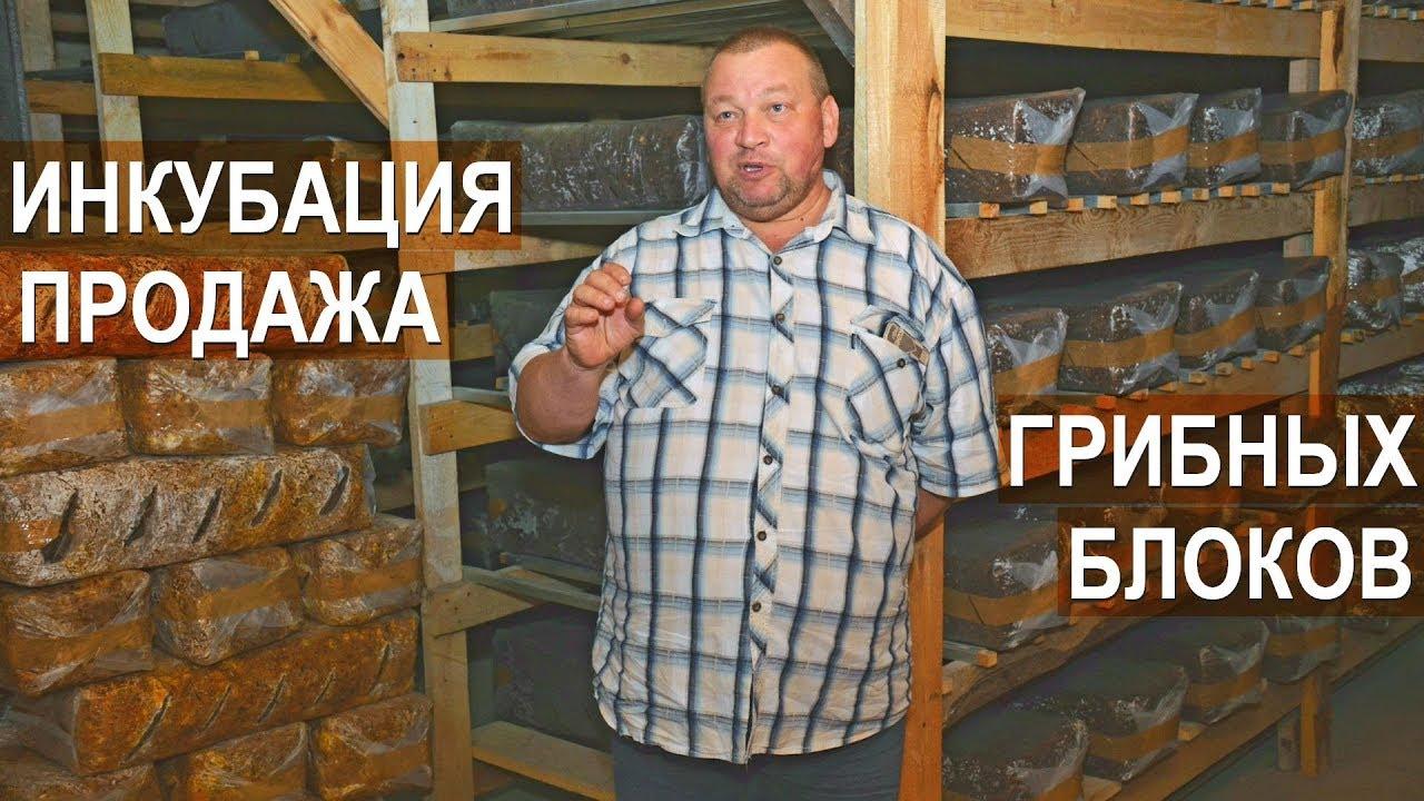 Подготовка субстрата и инкубациия грибных блоков. Продажа грибных блоков. Фермер Олег Топорков