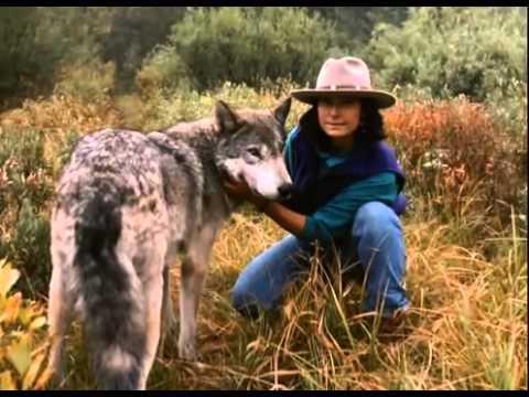 [Thế giới động vật] Chung sống cùng bầy chó sói