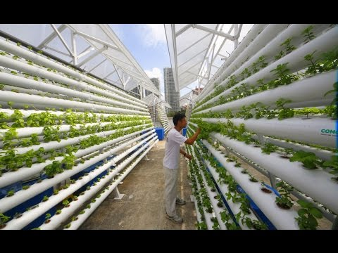 The Future of Vertical Farming: A Look Into What Could Become The Next Step in Urban Agriculture