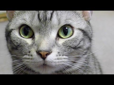 目覚めてすぐに話しかけてくる猫