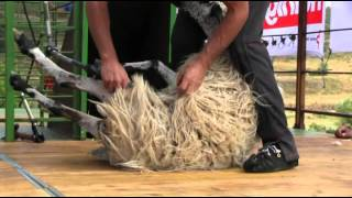 Salgüero Open Shearing Competition