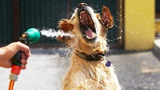 Dogs vs Water ★ Who wins? [Funny Pets]