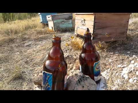 Eşek arısı tuzagı