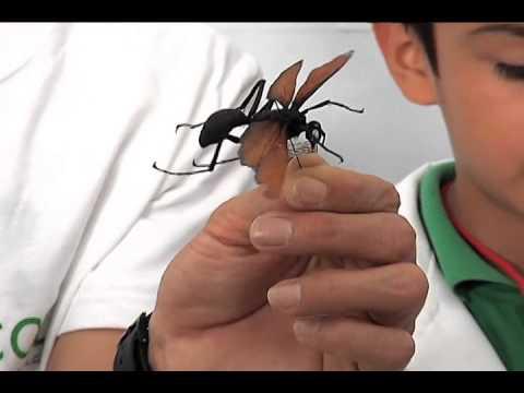 Colección de insectos, de los principales atractivos del Inecol