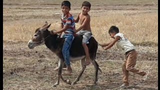 kids fun with donkey/funny video/best Pakistani funny video