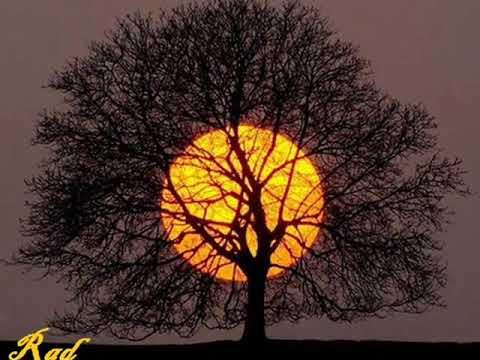 El toro enamorado de  la luna. Los fabulosos cadilacs