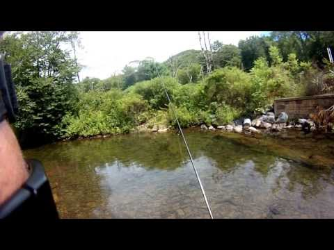 Trout Fishing Central Pennsylvania Mountain Stream
