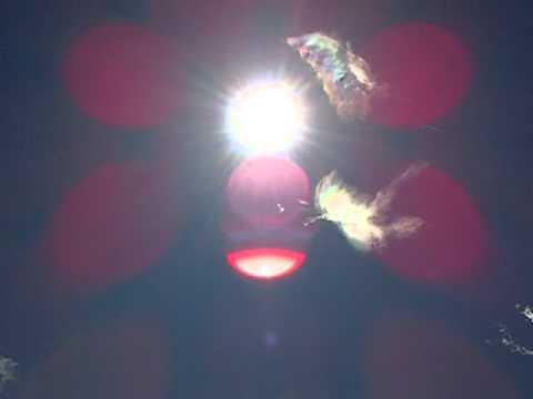 DANZA DEL SOL SORACA SAB 4-FEB-2012